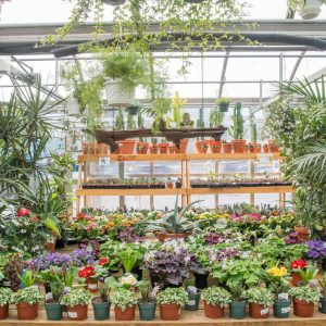 beautiful greenhouse plants display