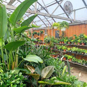 assortment of houseplants in greenhouse
