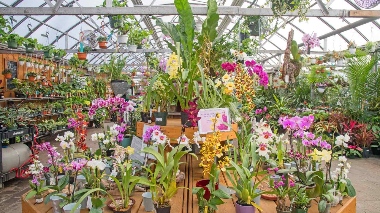 colorful orchids in houseplants section