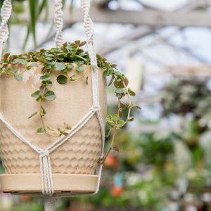 houseplant in hanging pot