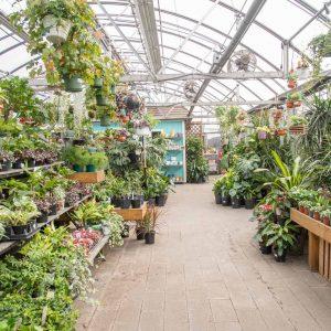 assortment of lush houseplants in greenhouse