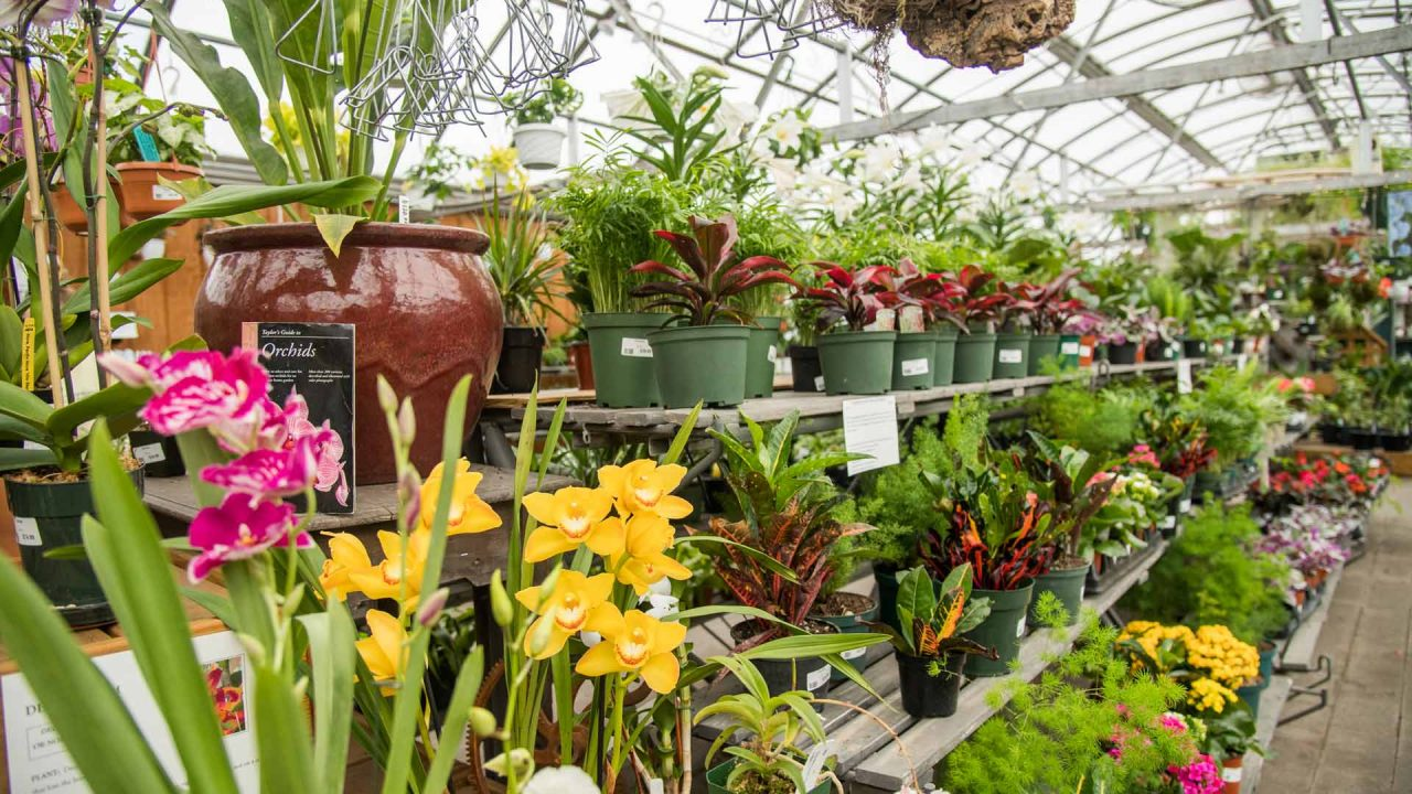 orchids and houseplants in the greenhouse