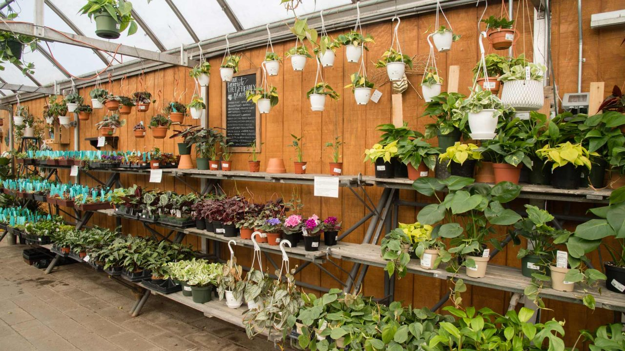 assortment of pet friendly houseplants