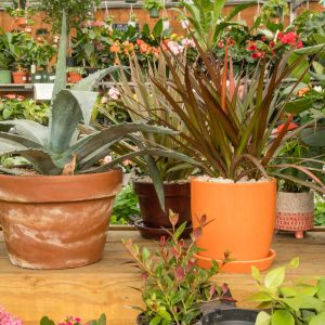 colorful pots filled with plants