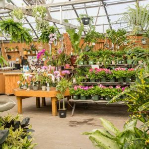 greenhouse stocked with beautiful flowers and houseplants