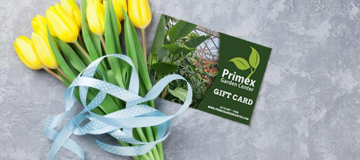 Order a Gift Card Online